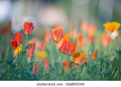 Red and orange flowers on a meadow shot with shallow depth of field and beautiful bokeh.