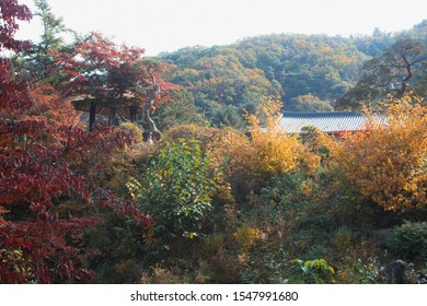 Red orange leaves in autumn forest against the sun with sun beams, autumnal background