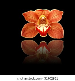 Red and orange orchid on black background with reflection.