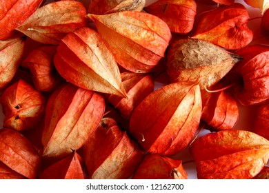 Red and orange physalis fruit background