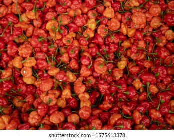 Red and Orange Sweet and Spicy Grenada Peppers