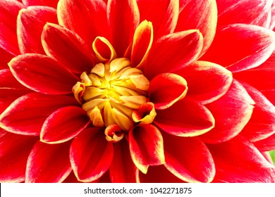 Red, orange and yellow flame dahlia flower with yellow center close up macro photo. Color photo emphasizing the bright reddish colours and abstract details.