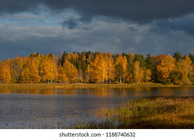 Red orange yellow leaves on forest trees branch on green grass coast at lake water with reflection in autumn sunny day stormy sky clouds light