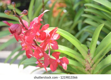 Red Orchid Background Green Tree Background