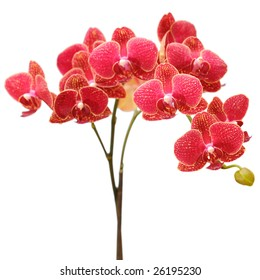 red orchid bouquet