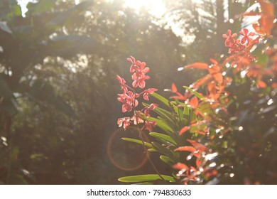 Red orchid flowers against the warm bright rays of the morning sunlight. Green leaves of the bush is blurred at the foreground.