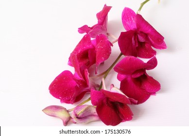 Red orchid isolated over white background