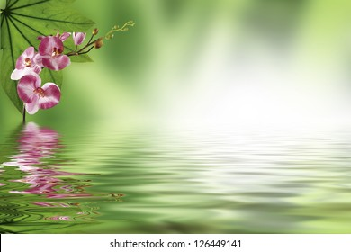 red orchid on green background reflecting in water