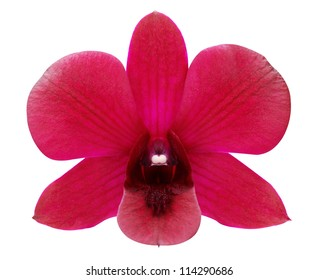 Red orchid on a white background.