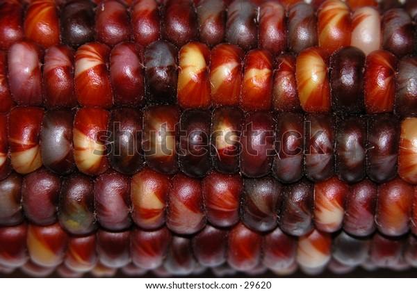 Red Ornamental Corn