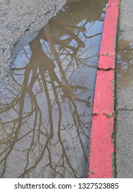Red Painted Curb with Tree Reflection in Water