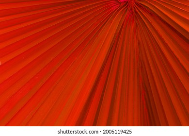 red palmtree leaf texture with stripes. Fresh tropical palm leaf surface close up-background image