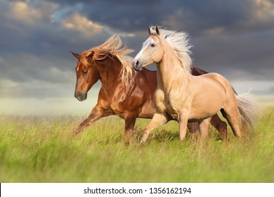 Red and palomino horse with long blond mane in motion on field
