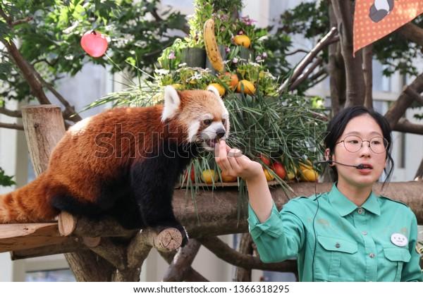 red-panda-takes-treat-guide-600w-1366318