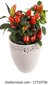 Red paprika in white pot