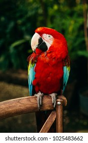 red parrot macaw on a background of green plants