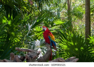 Red Parrots in Caribbean