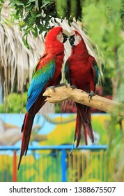 Red parrots together on a branch