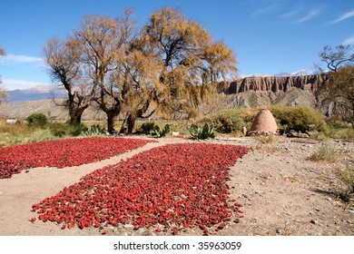 Red peppers, Salta, Argentina,