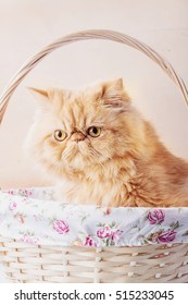 Red Persian Cat sitting in a basket