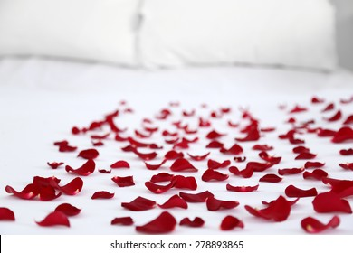 Red petals on bed, close up