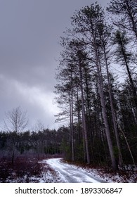 Red pines towering over a winter woodland path on an overcast cold winter day with snow on the ground.