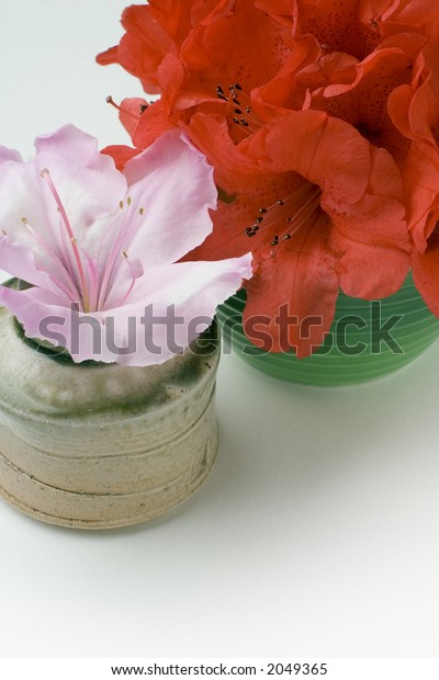 Red and pink azalea or rhododendron flowers in small vases. Pink azalea is in a hand made ceramic pot.