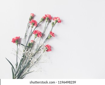 Red pink cloves flowers and gypsophila on light gray background. copy space. flat lay, top view