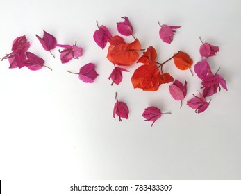 Red, Pink, orange Bougaville on a white background.