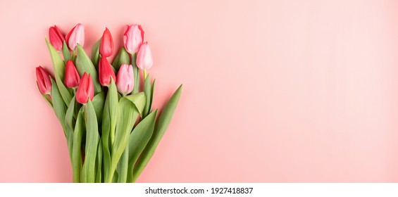 Red and pink tulips on pink solid background top view flat lay. Banner