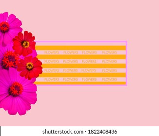 Red pink zinnia flower and floral text frame on light pink background for texture,Graphic design