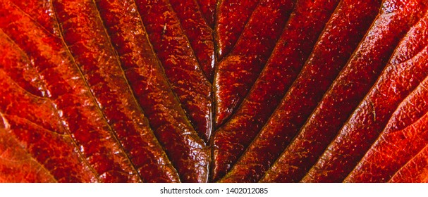 Red plant macro repetitive pattern texture close up