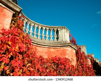 Red plaster wall with wine creeper at sun against blue sky at autumn season
