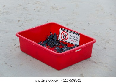"A red plastic box with several little green sea turtle (Chelonia mydas) hatchlings, waiting to be released by tourists. Organized by ""SEATRU"". Taken in April 2017 on Redang Island, Malaysia."