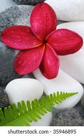 Red Plumeria on white stone