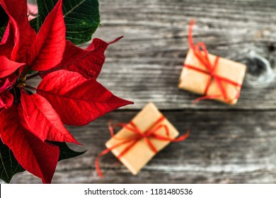 Red poinsettia on rustic background. Christmas traditional flower and christmas gift boxes on wooden table.
