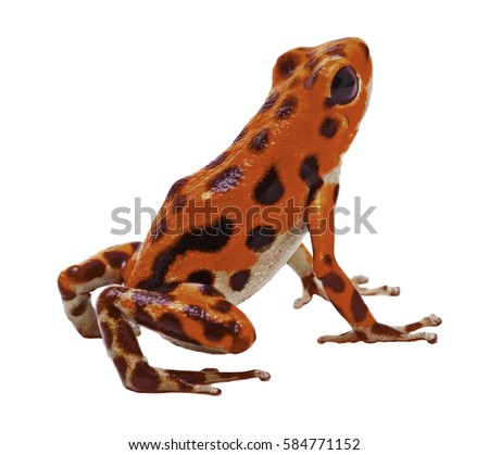 red poison dart arrow frog tropical の写真素材 今すぐ編集