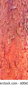 Red ponderosa pine wood,Organic pattern, Texture, Branding, Red wood