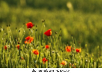 red poppies, blurred 100%