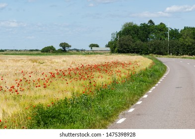 Red poppies in a field by a winding road in the World Heritage  Agricultural Landscape of Southern Oland in Sweden