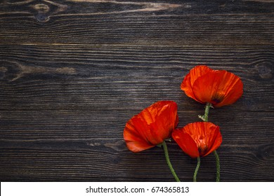 Red poppies flowers on dark wood background. Top view with copy space.