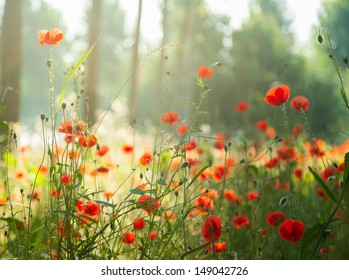 red poppies in the forest with lights