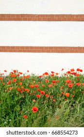 Red poppies with a lined wall background