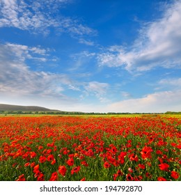 Red poppies on a background of blue sky with clouds