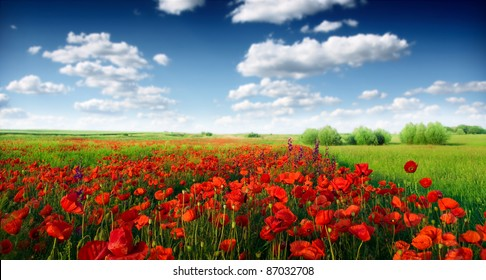 Red poppies on spring meadow