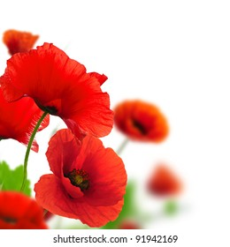 Red poppy images stock photos vectors shutterstock red poppies over a white background border floral design for an angle of page mightylinksfo