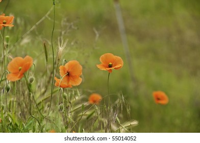 Red poppies with shallow depth of field.