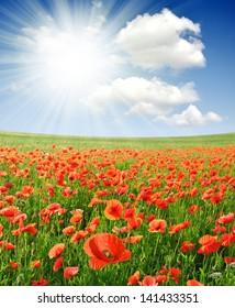 red poppy field with sunny sky