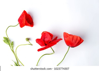 Red Poppy flower on white background top view