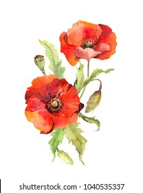 Red poppy flowers composition. Watercolor